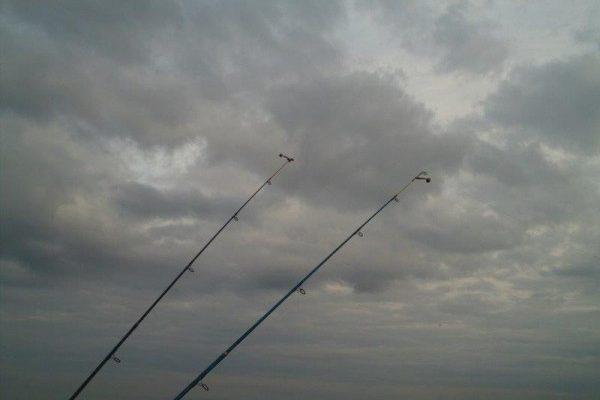 Nico, solo vissen aan Waarde