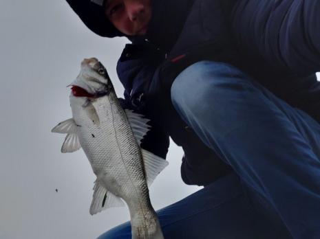 Dennis, vissen aan de Waterweg