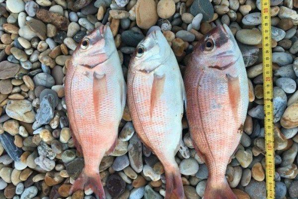 Gerard, vissen in Engeland