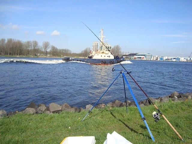 Willem(gaatvissen) aan het NoordZeeKanaal