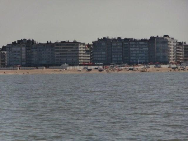 Tong voor de kust in België