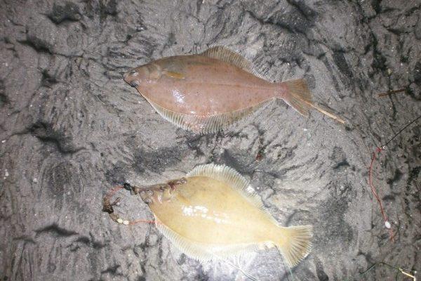 Huib, wintervis aan Waarde