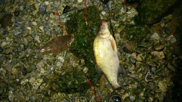 Op tong vissen aan de Botlek, Edijan