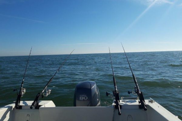Tom, bootvissen Voordelta