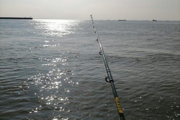 Dennis, vissen op Zeebaars